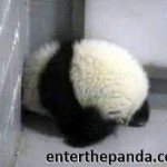 Feels like a Monday, Panda?